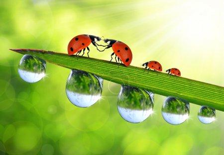 Love Ladybug sitting on the dewy grass