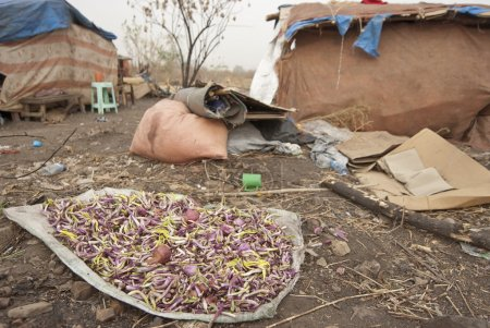 Food waste for eating in displaced persons camp in Juba, South Sudan.