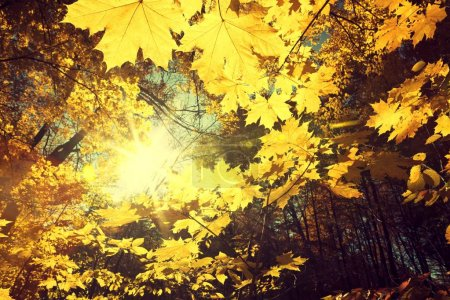 Sunlight in the autumn forest. Beauty nature background