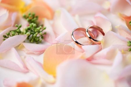 Wedding rings on rose petals