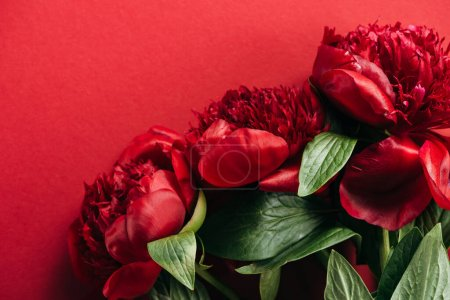top view of red peonies with green leaves on red background