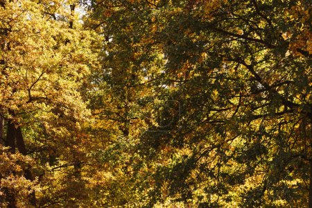 scenic autumnal forest with golden foliage in sunlight