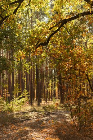 scenic autumnal forest with golden foliage and shining sun