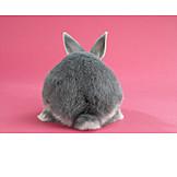 Rear view, Easter bunny, Rabbit, Rabbit
