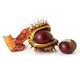 Chestnut tree, Horse chestnut, Spikes