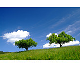 Tree, Meadow, Two