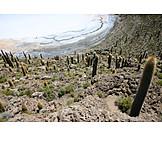 Cactus, Salt lake, Isla de pescadores