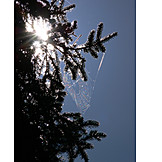 Spider web, Branch