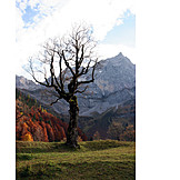 Mountain range, Autumn, Maple tree