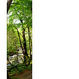Forest, Saalachtal
