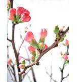 Twig, Spring, Bud
