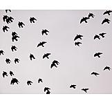 Flying, Bird, Swarm of birds