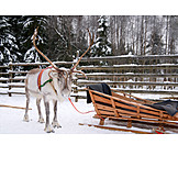 Sleigh, Reindeer, Swedish lapland