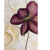 Flower, Dried flower