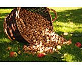 Thanksgiving, Harvest, Walnut
