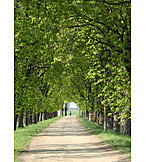 Alley, Chestnut tree
