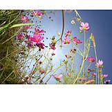 Flower, Jewelry cosmos flower