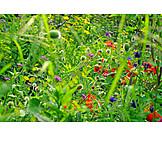 Grasses, Flower meadow