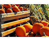 Autumn, Squash, Harvest