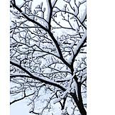 Tree, Winter, Snow, Snowy