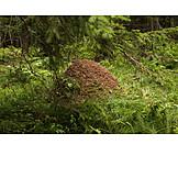 Anthill, Nest, Animal housing