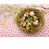 Quail eggs, Bird's nest, Bird's egg