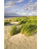 Dune, Langeoog, Coastline