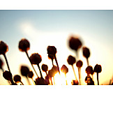 Nature, Sunlight, Flower