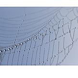 Spider web, Dew