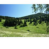 Landscape, Central mountains, Thuringian forest