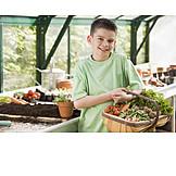 Boy, Harvest, Present, Vegetable harvest