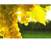Grape, White grape