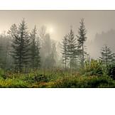 Forest, Fog