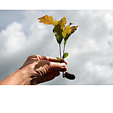 Growth, Hand, Oak tree, Seedling