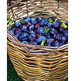 Fruit harvest, Plum