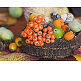 Autumn, Autumn, Rowanberry, Autumn decoration
