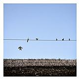Bird, Power line, Thatch roof, Swallow