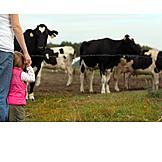 Child, Curiosity & expectation, Cow