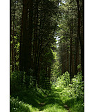 Forest, High seat