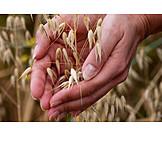 Agriculture, Harvest, Oat