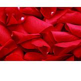 Red, Rose Petal, Petal