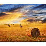 Field, Straw Bales, Harvest, Field Stubble