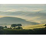 Hill landscape, Tuscany