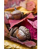 Autumn, Autumn leaves, Acorn