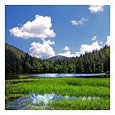 Landscape, Lake, Forest