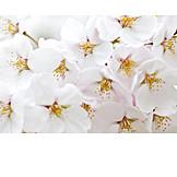 Spring, Apple Blossom, Tree Blossom