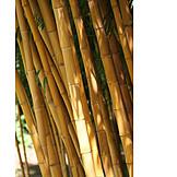 Bamboo, Bamboo grove