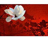 Flower, Blossom, Shadow