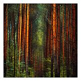 Forest, Tree trunk, Coniferous