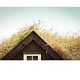 Cabin, Gable, Overgrown